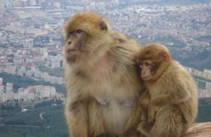 Le pic des singes à Gouraya